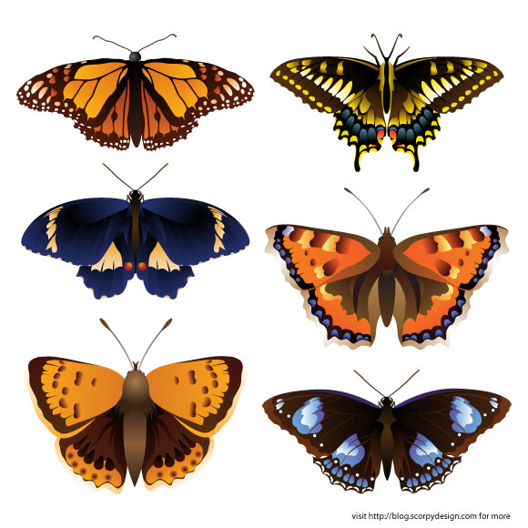 Butterfly Vector, Butterfly Vector Pictures, Beautiful Butterfly Vector Pictures, Free Butterfly Vectors