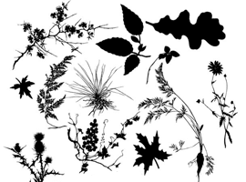 Plant Silhouettes