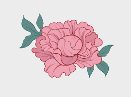 Vector Pink Peony