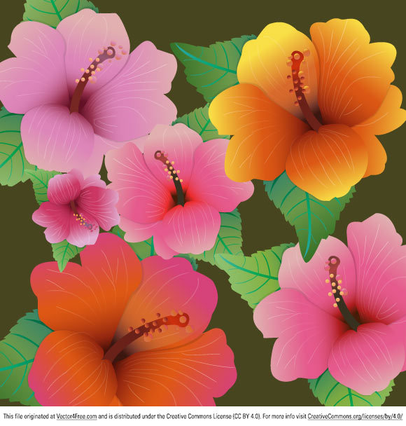 Colorful hibiscus flowers - vector freebies. Hope you like them!