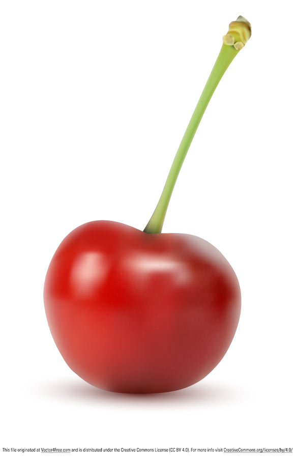 free vectors graphics - Vector Cherry