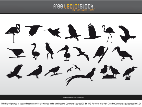 Birds Collectionof free vector silhouettes like:flamenco, eagle, falcon, hawk, stork, seagull, hummingbird... You can download this great bird vector for free and use it in your designs.
