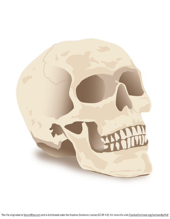 Skull vector for this Halloween by Craig Balbirnie.
