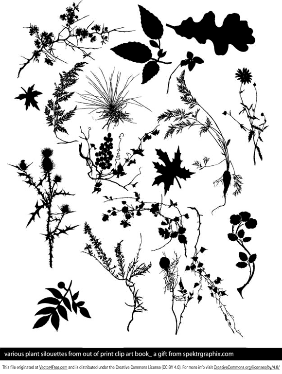 Various plant silouettes from out of print clip art book, includes corn-flower, oak and maple leaf, teasel, birch-tree twig